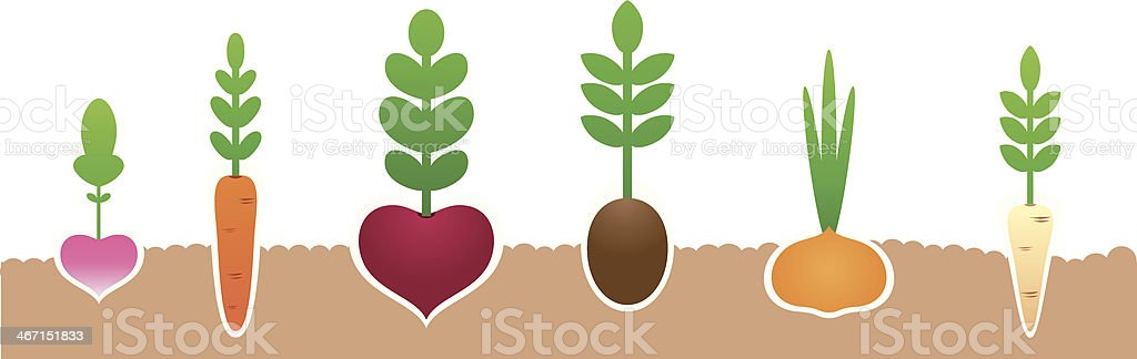 Illustration of vegetables growing from the dirt vector art illustration
