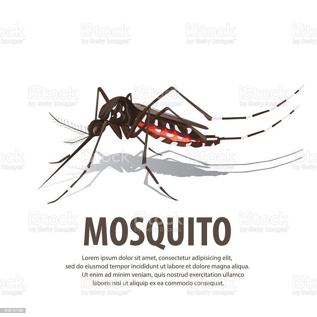 illustration vector. Target on mosquito. vector art illustration