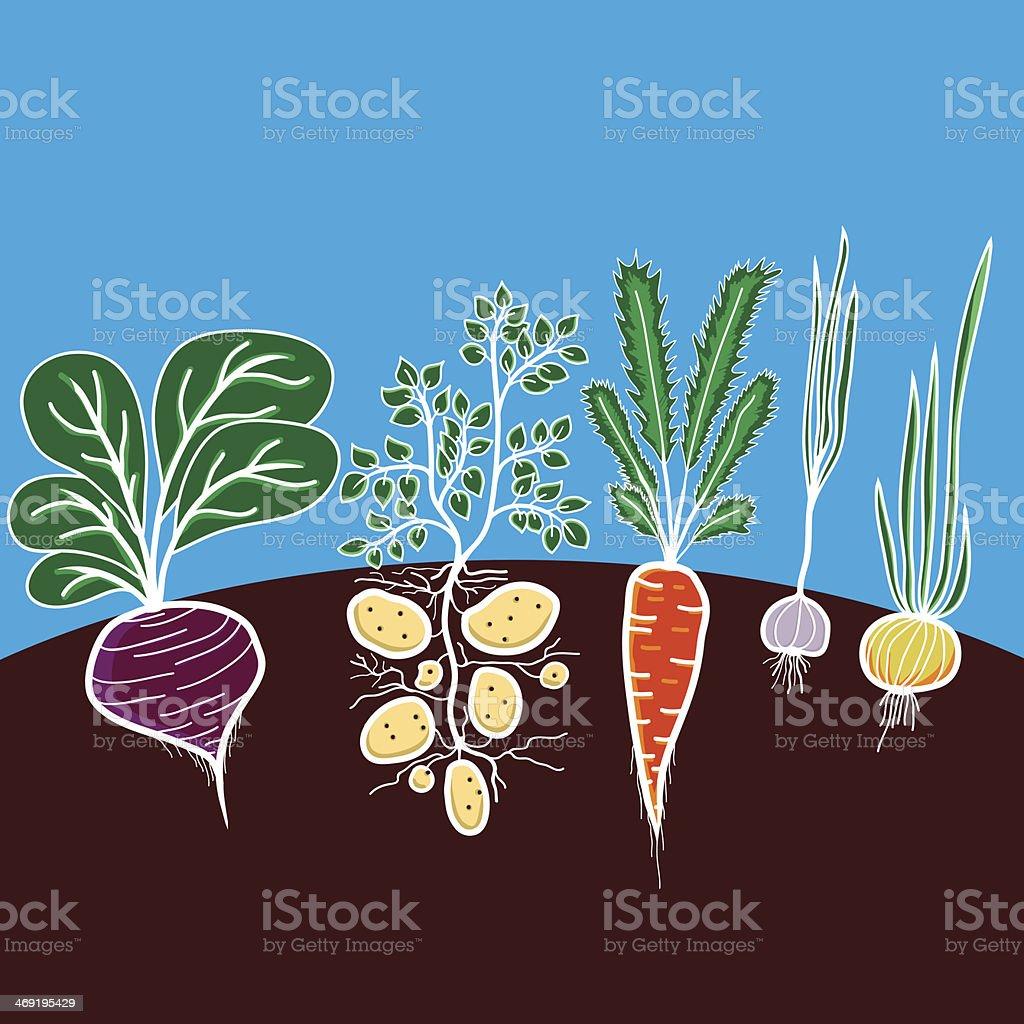 Illustration with growing vegetables vector art illustration