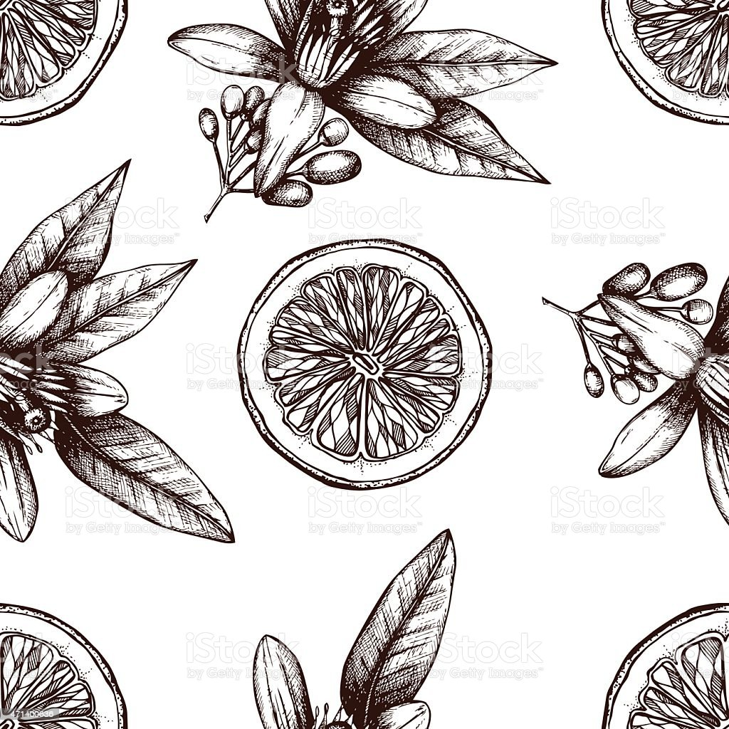 Illustrations of various fruits and organic items on white vector art illustration