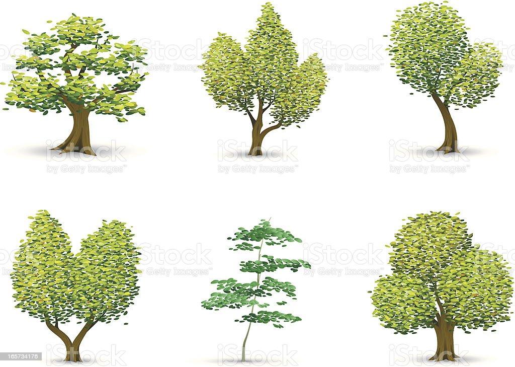 Illustrative Trees vector art illustration