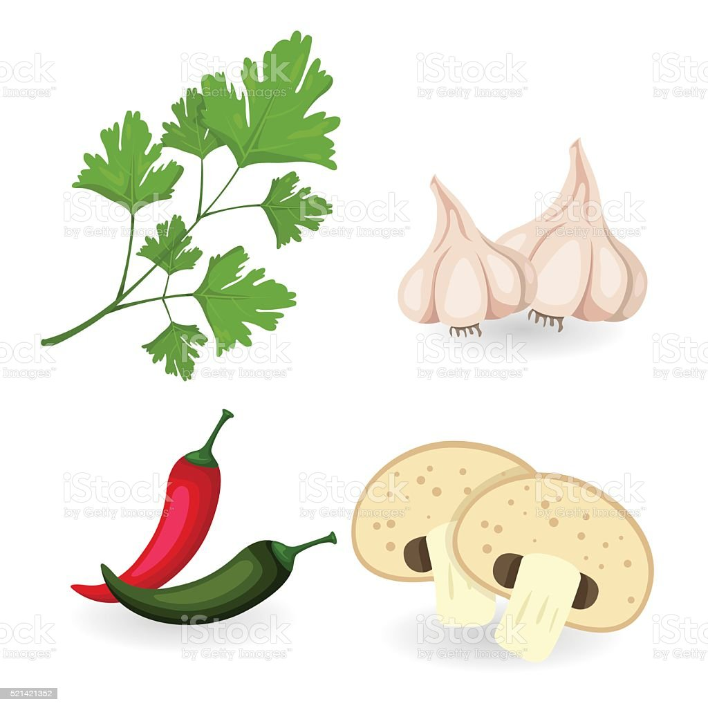 Illustrator of spice and herbs vector art illustration