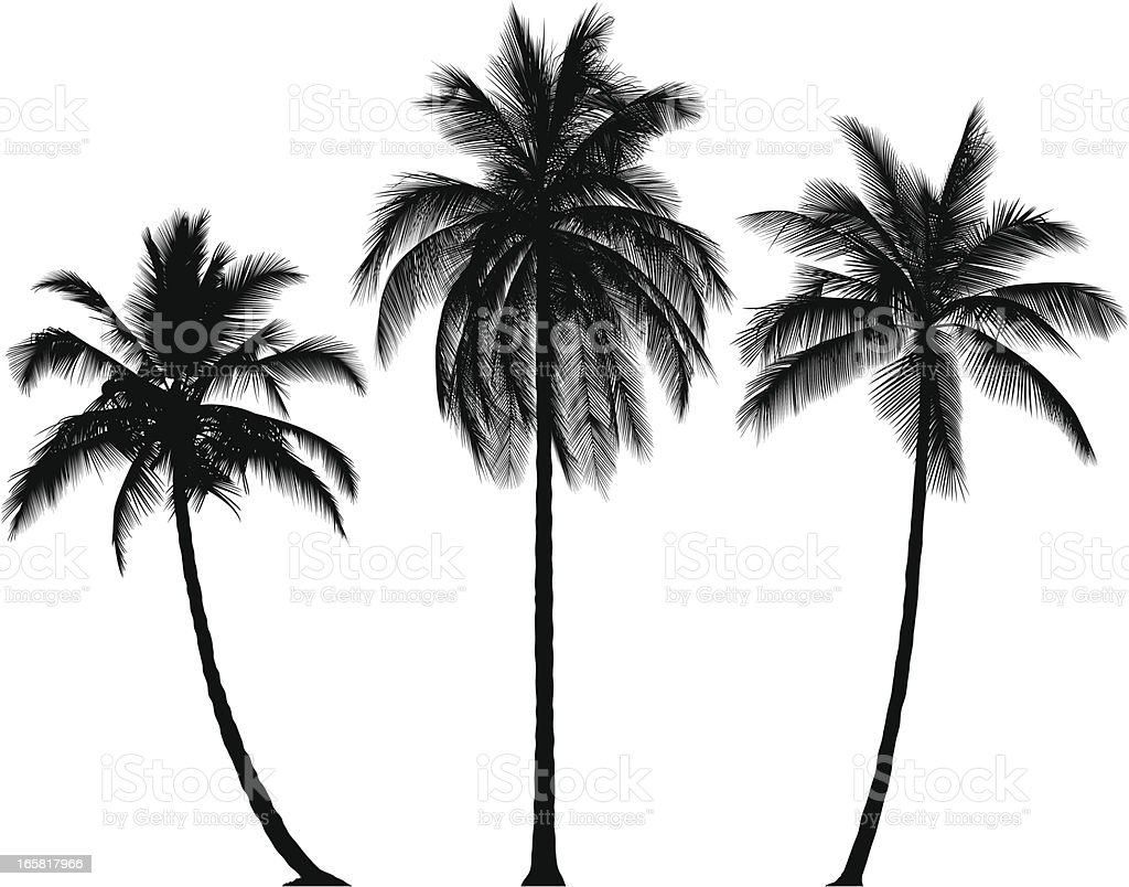 Incredibly Detailed Palm Trees royalty-free stock vector art