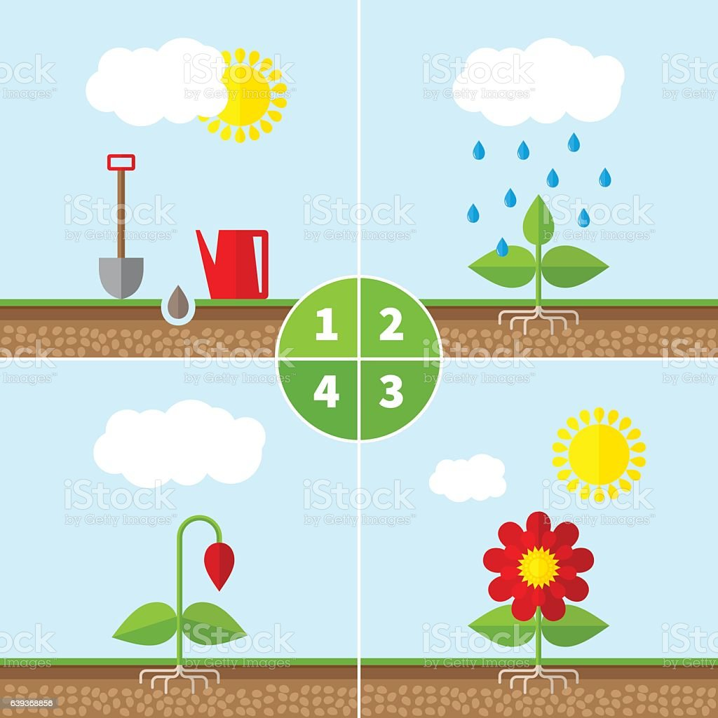 Infographic four stages of plant growth. vector art illustration