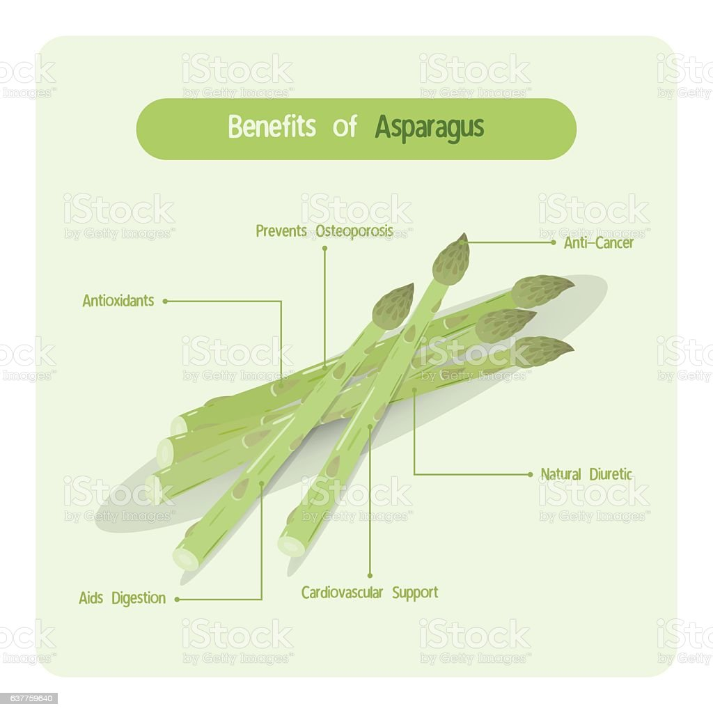 Infographic of asparagus benefits vector art illustration