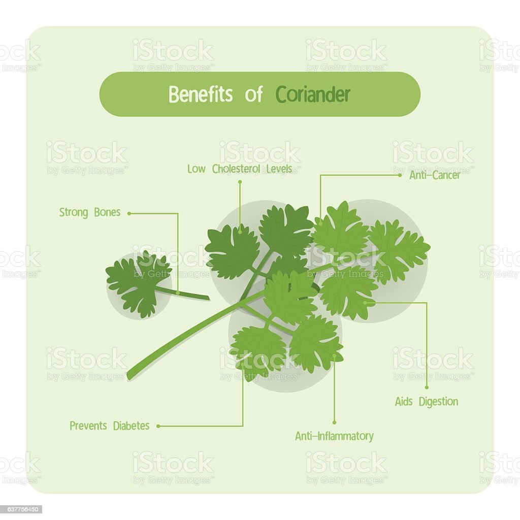 Infographic of coriander leaves benefits vector art illustration