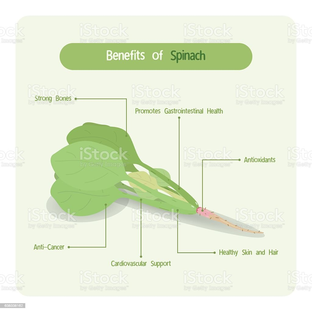 Infographic of spinach benefits vector art illustration