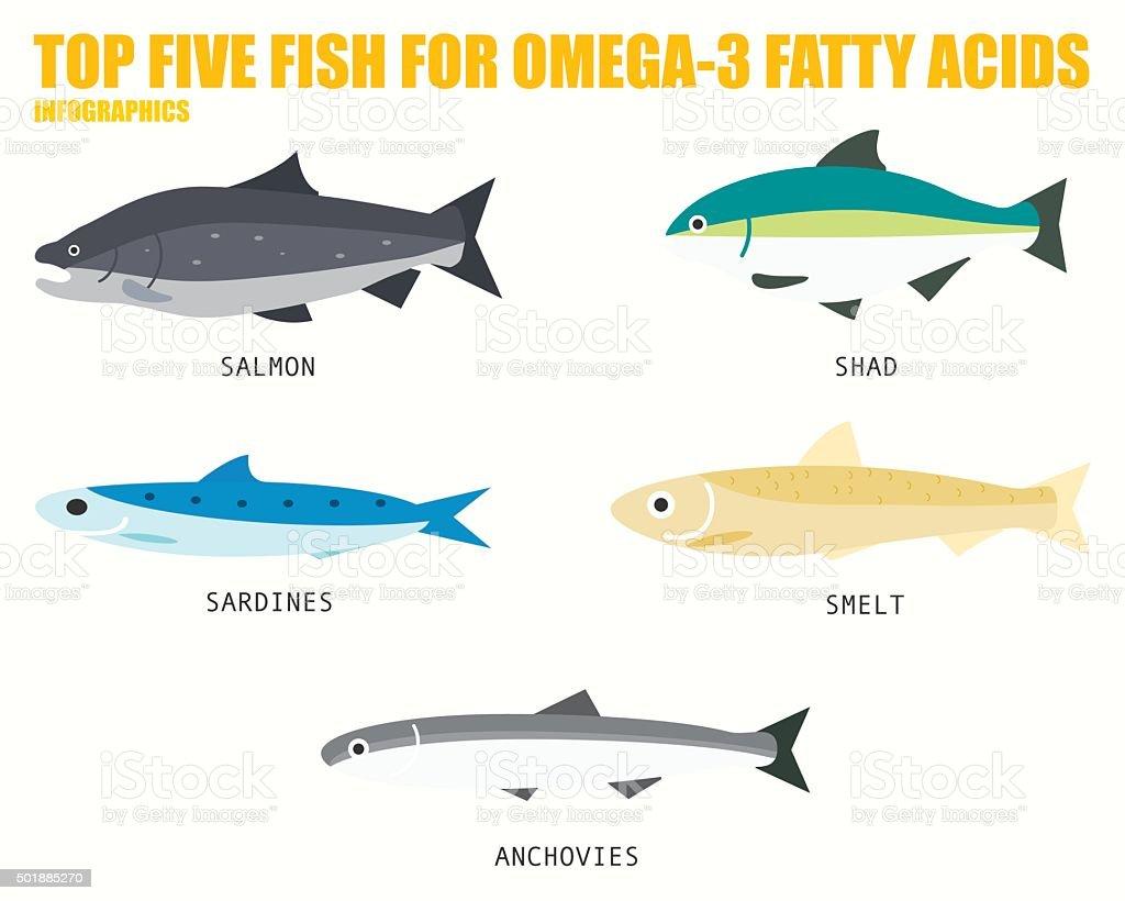 TOP FIVE FISH FOR OMEGA 3 FATTY ACIDS infographics vector art illustration