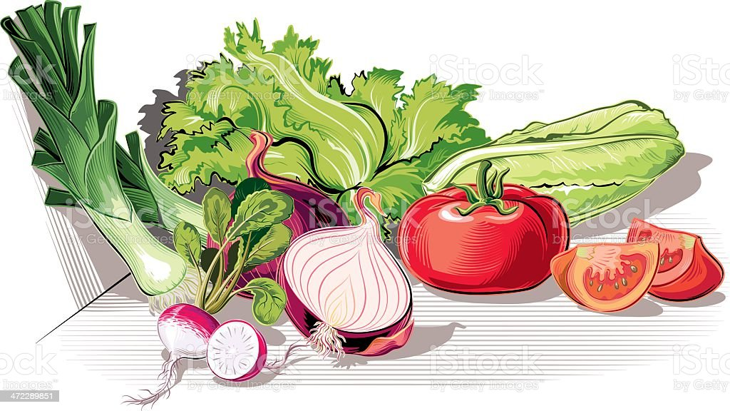ingredients for salad vector art illustration
