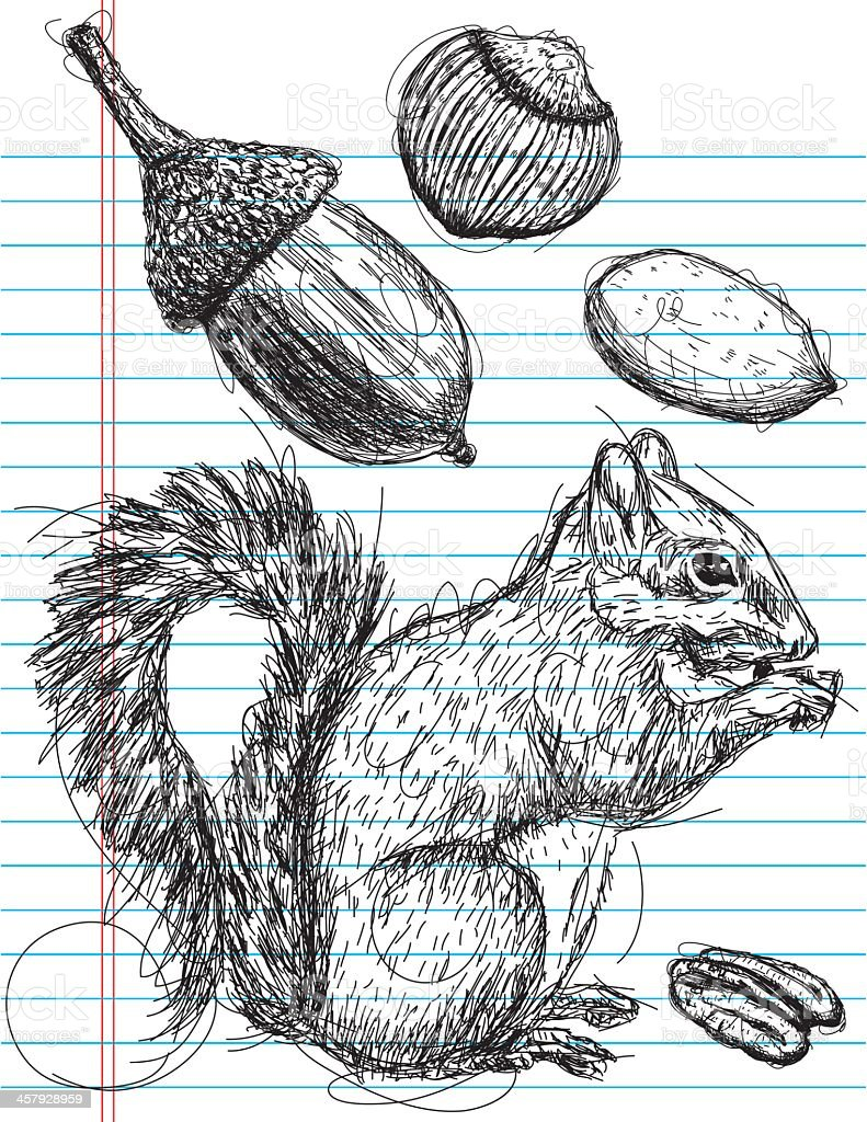 Ink drawing on notebook paper of a squirrel and nuts vector art illustration
