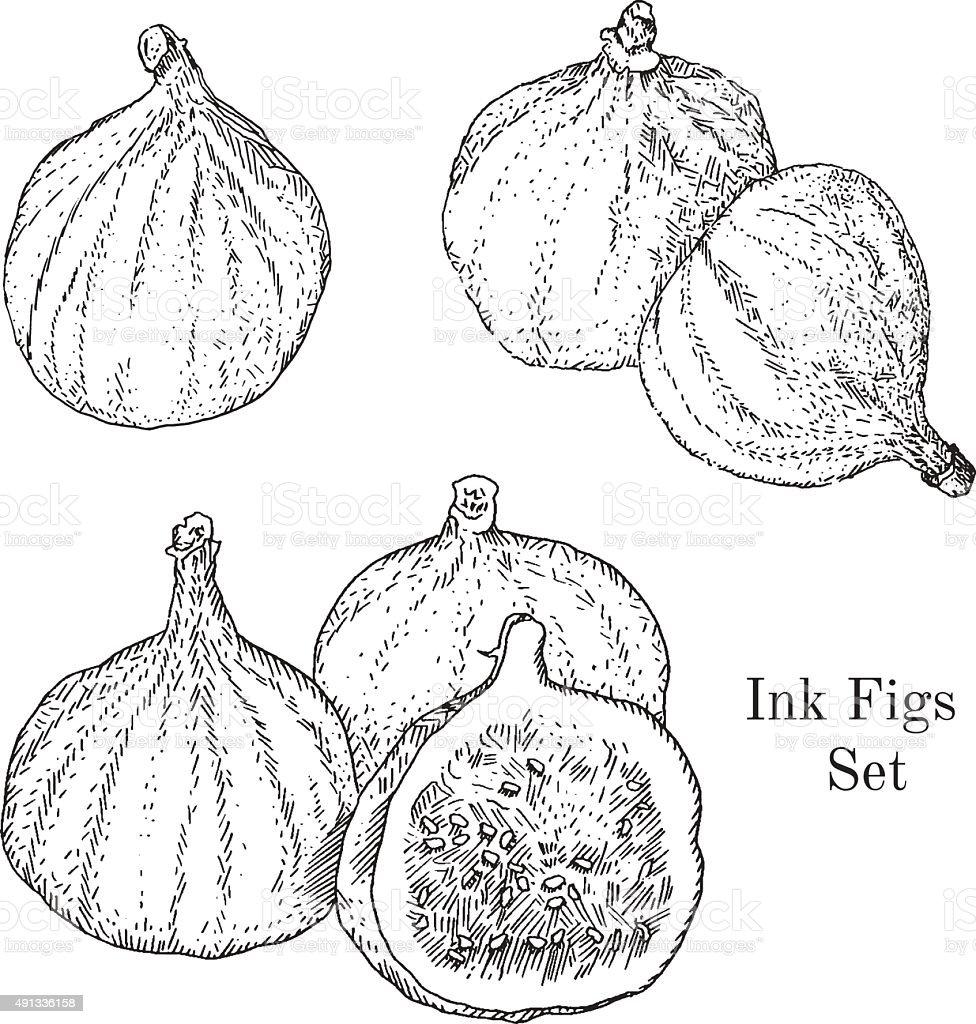 Ink figs sketches set vector art illustration