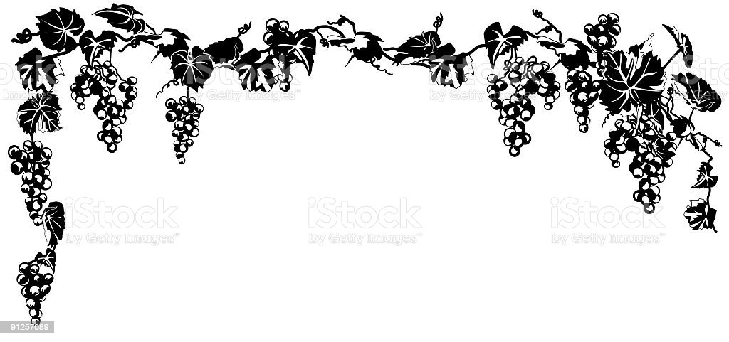 Ink Grapevine hanging swag done in black and white royalty-free stock vector art