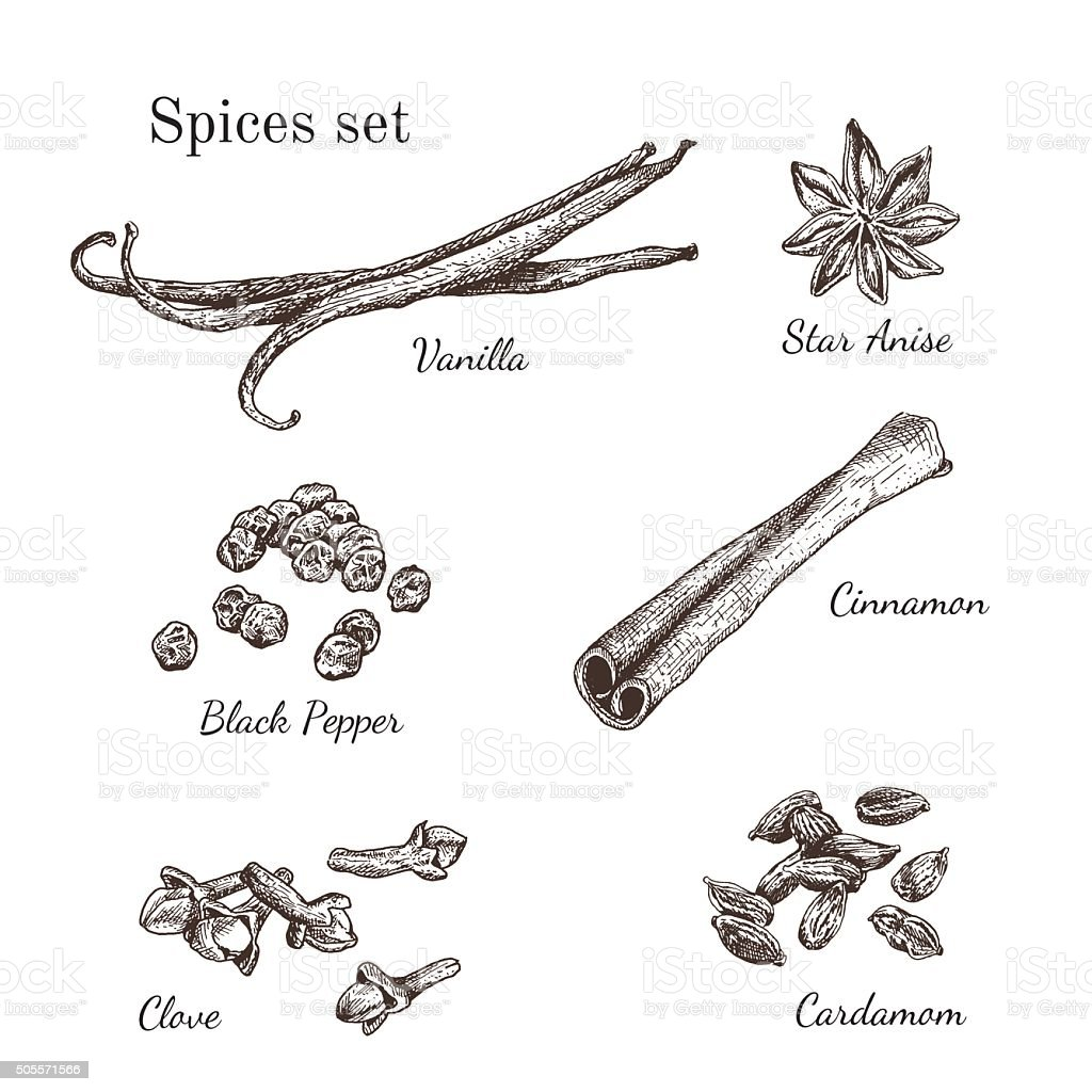 Ink hand drawn spices set vector art illustration