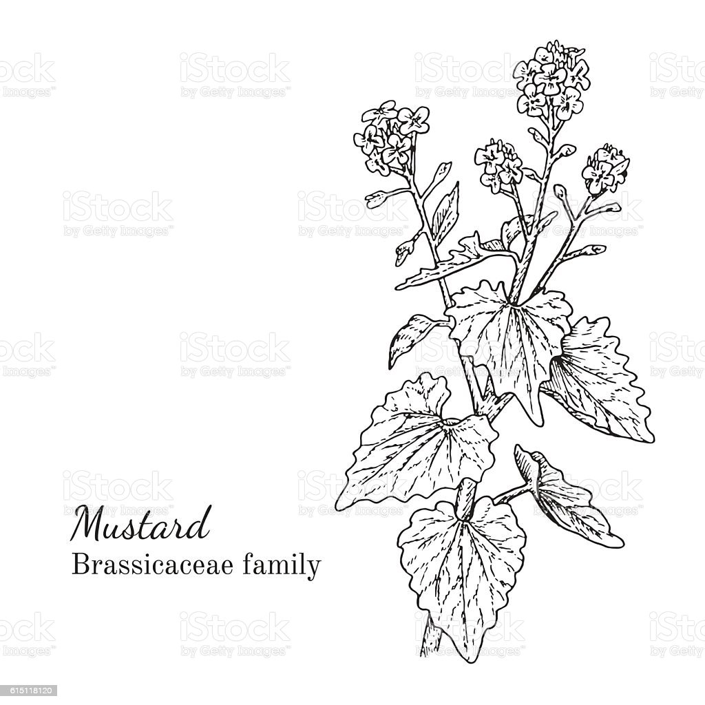 Ink mustard hand drawn sketch vector art illustration