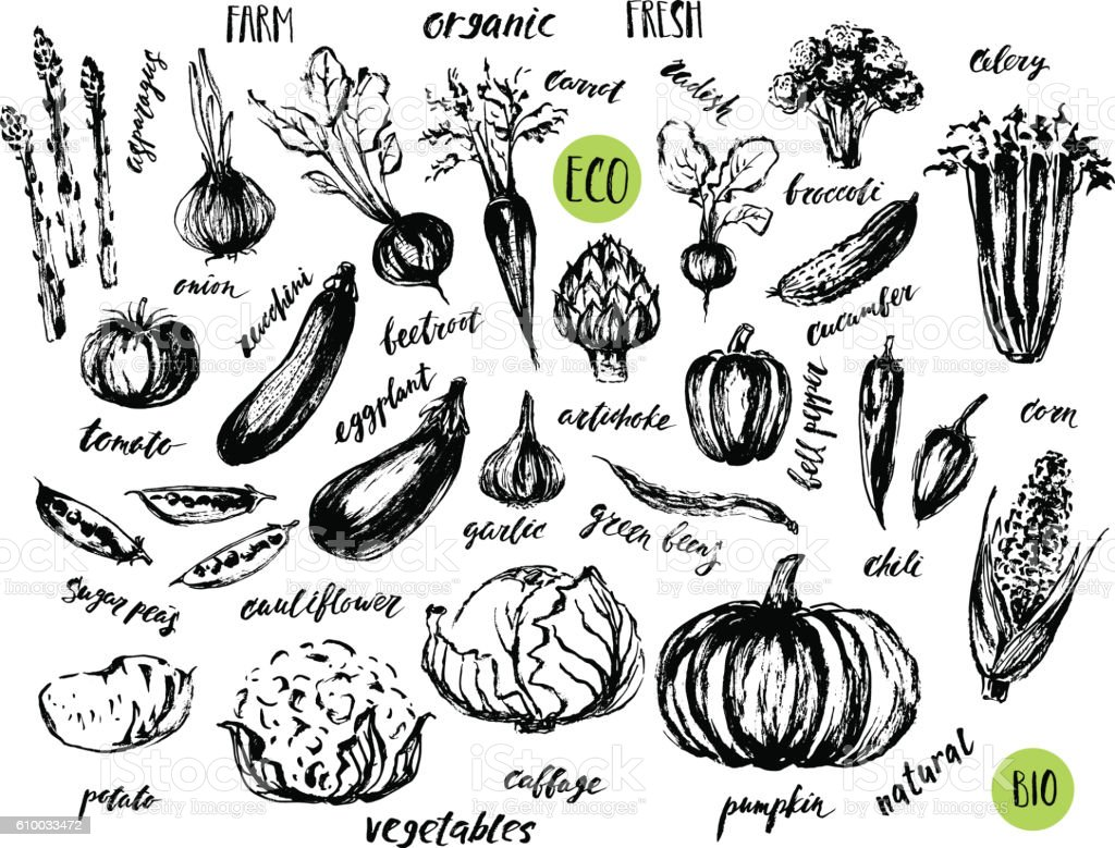 Ink sketch of vegetables with hand lettering names. vector art illustration