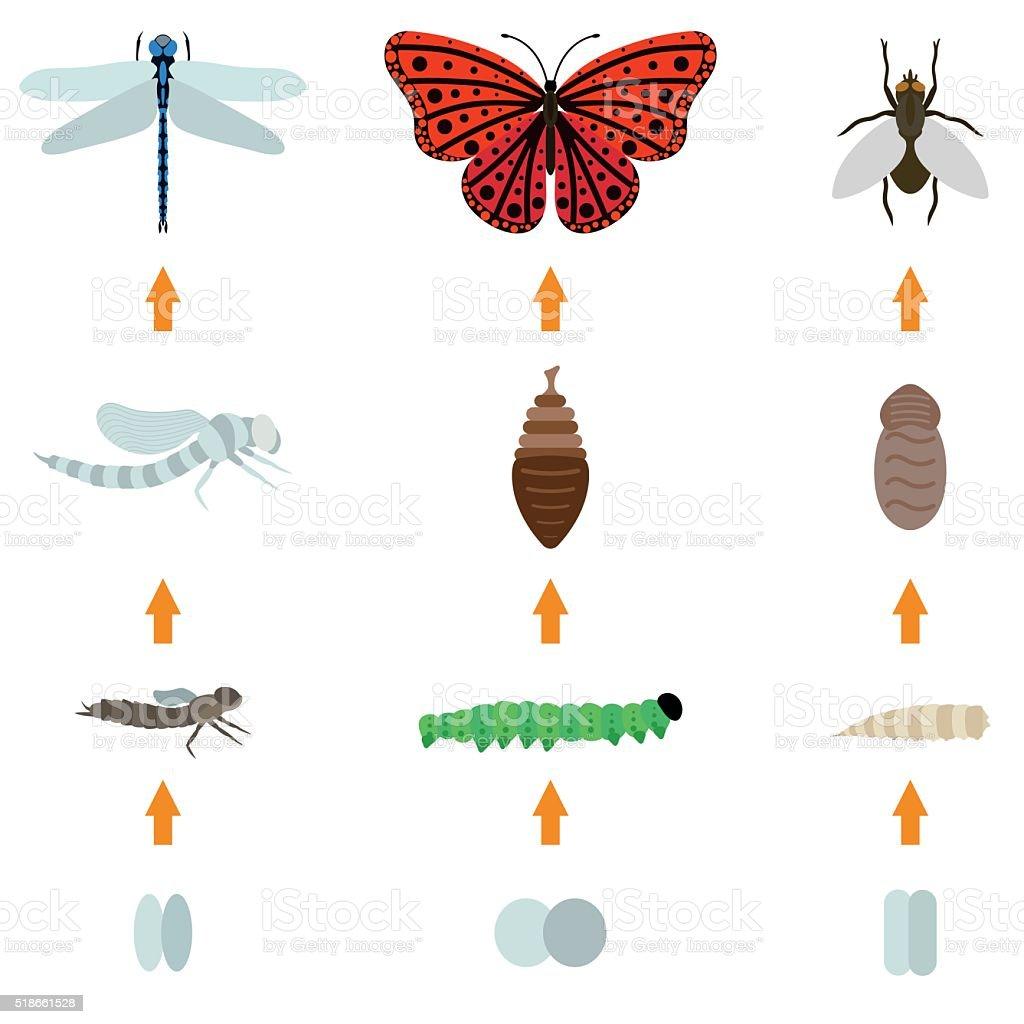 insect birth life vector art illustration