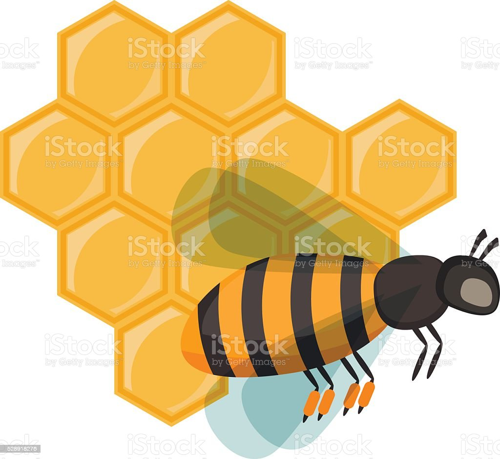 Insect honey bee isolated on white vector vector art illustration