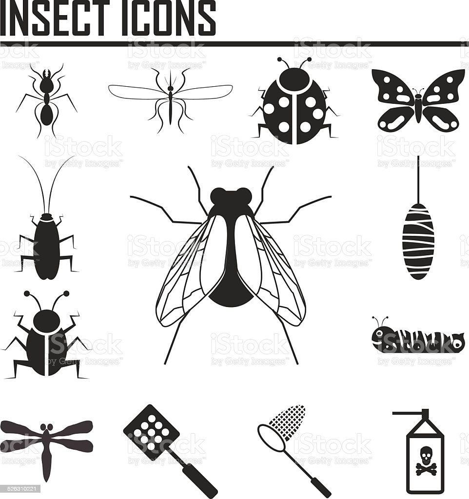 Insect icons - Illustration vector art illustration