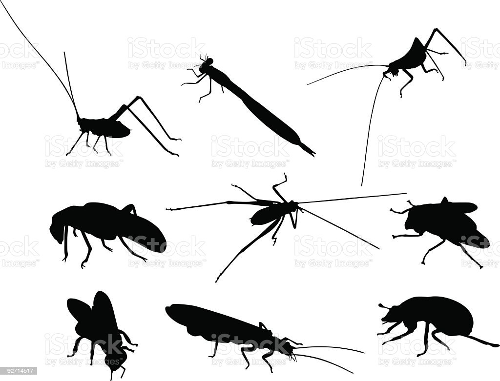 Insect shapes vector art illustration