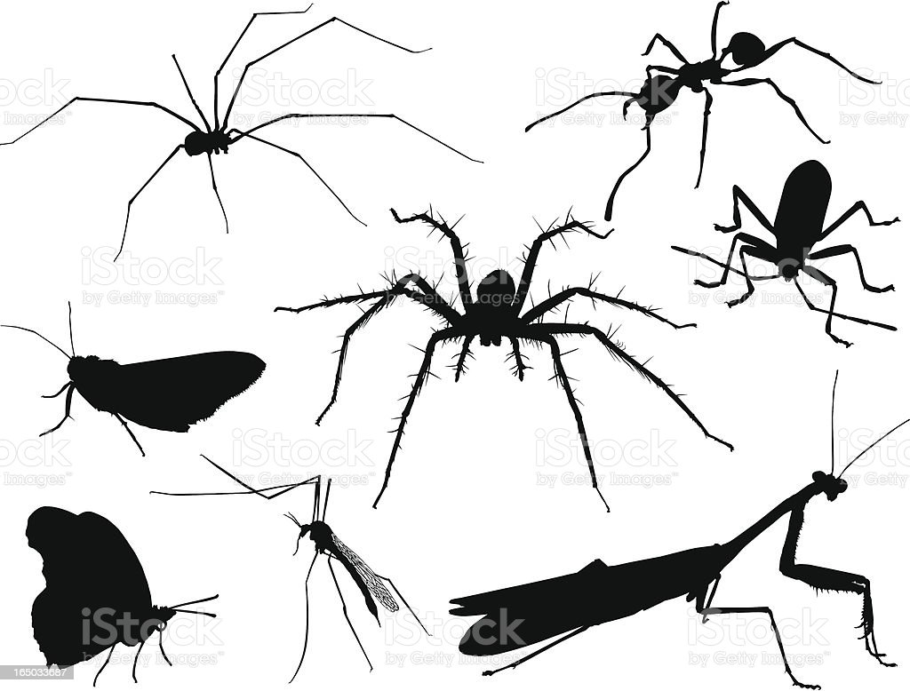 Insect Silhouettes 2 (Vector) vector art illustration