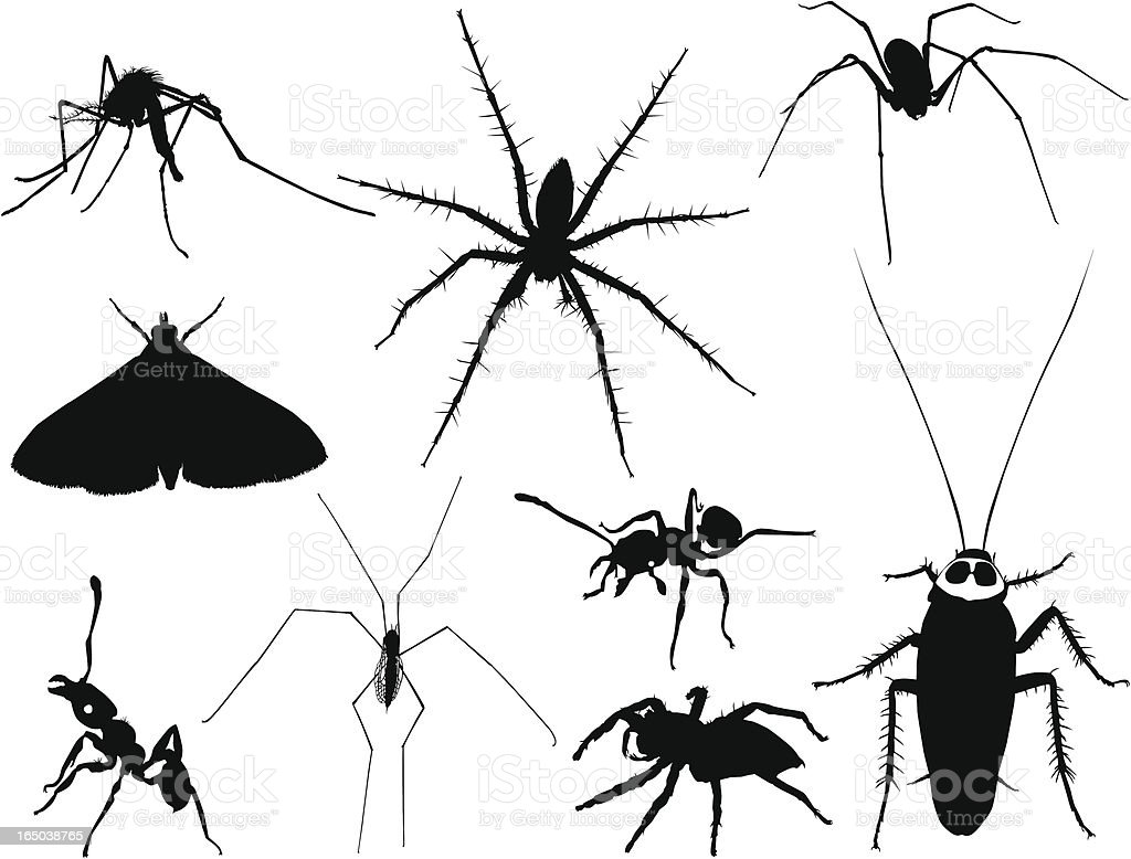 Insect Silhouettes 3 (Vector) royalty-free stock vector art