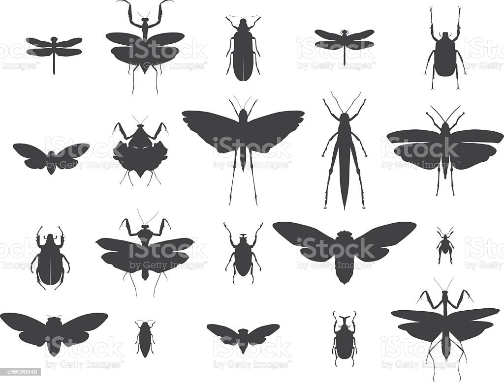 Insect silhouettes set vector art illustration