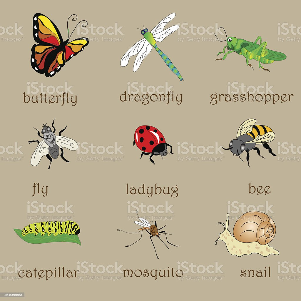 Insects Set royalty-free stock vector art