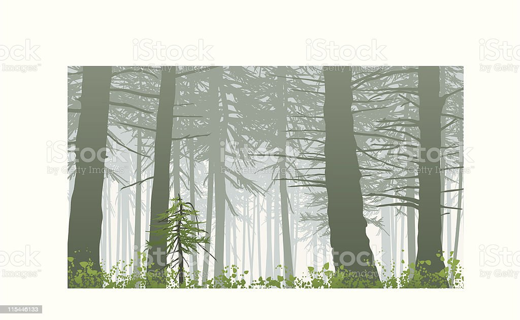 inspiring misty rainforest scene on mount maxwell vector art illustration