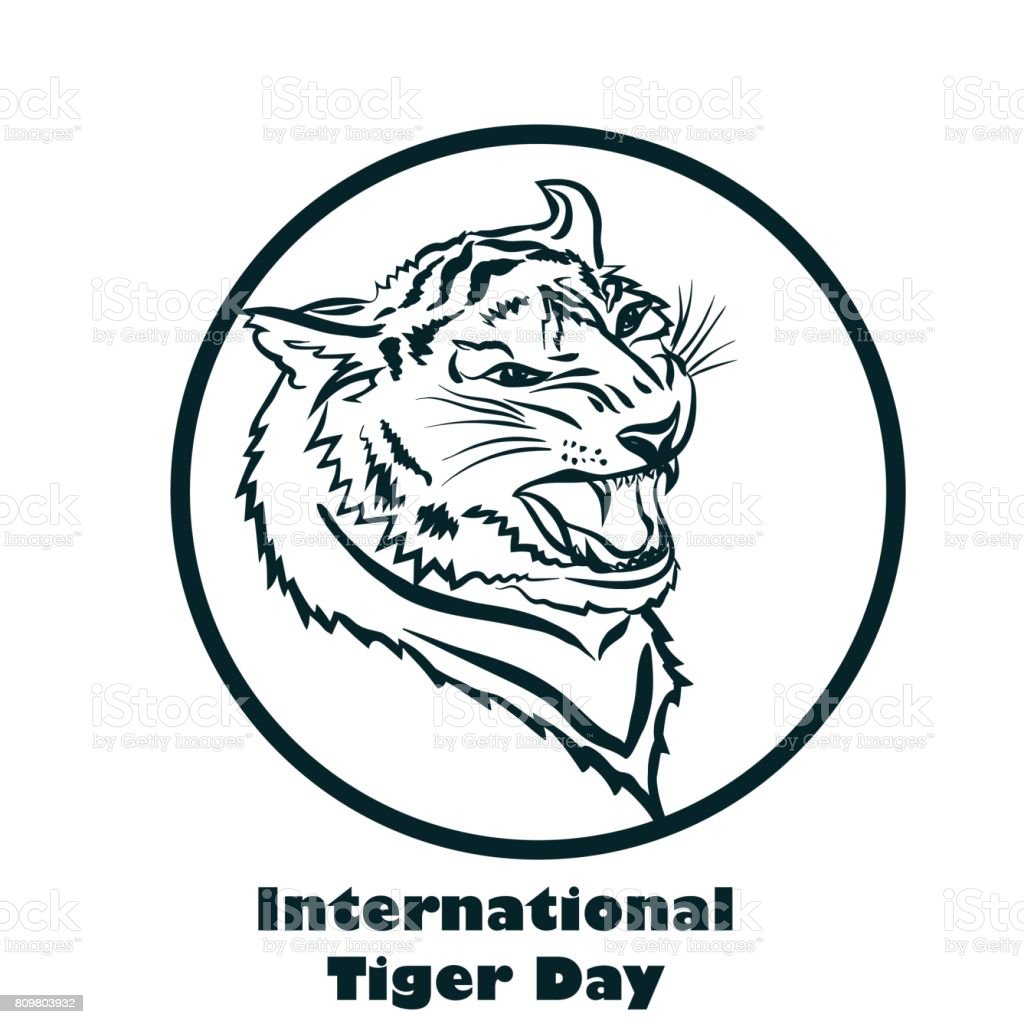 International Tiger day poster template with angry tiger head. vector art illustration