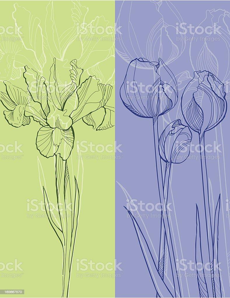 Iris and Tulips royalty-free stock vector art