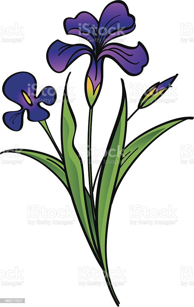 Iris - beautiful flowers vector art illustration
