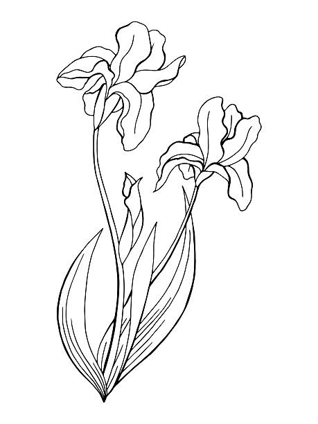 Iris plant flower outline silhouette clip art vector for Iris flower coloring page
