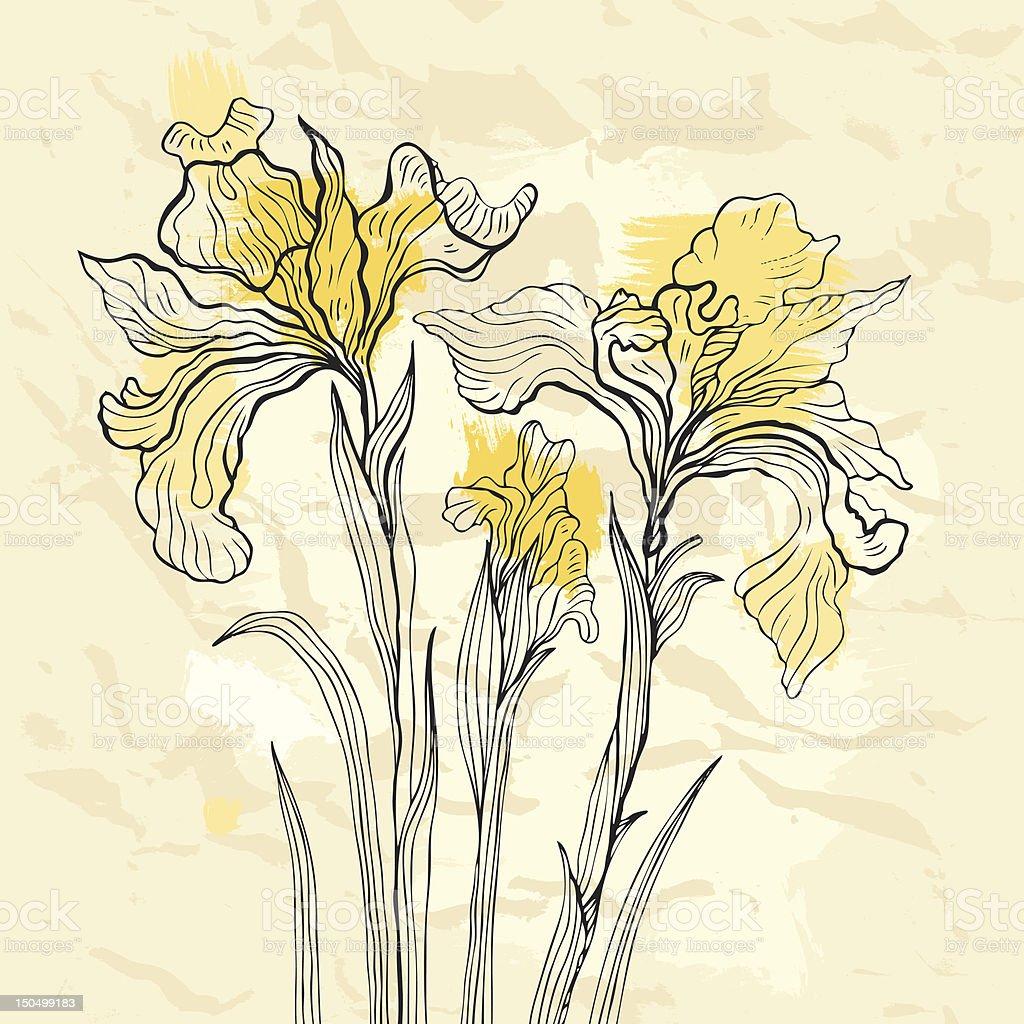 Iris flower vector illustration. vector art illustration