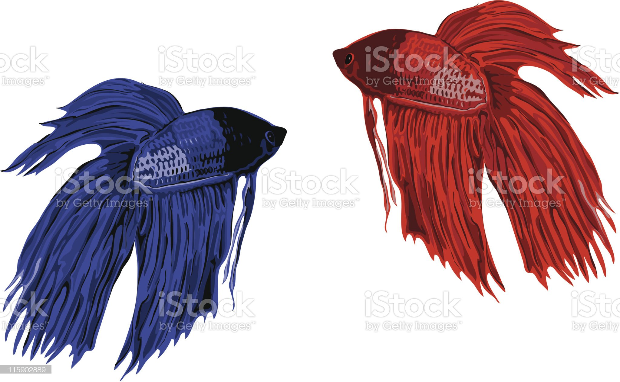 Isolated Betta Fish royalty-free stock vector art