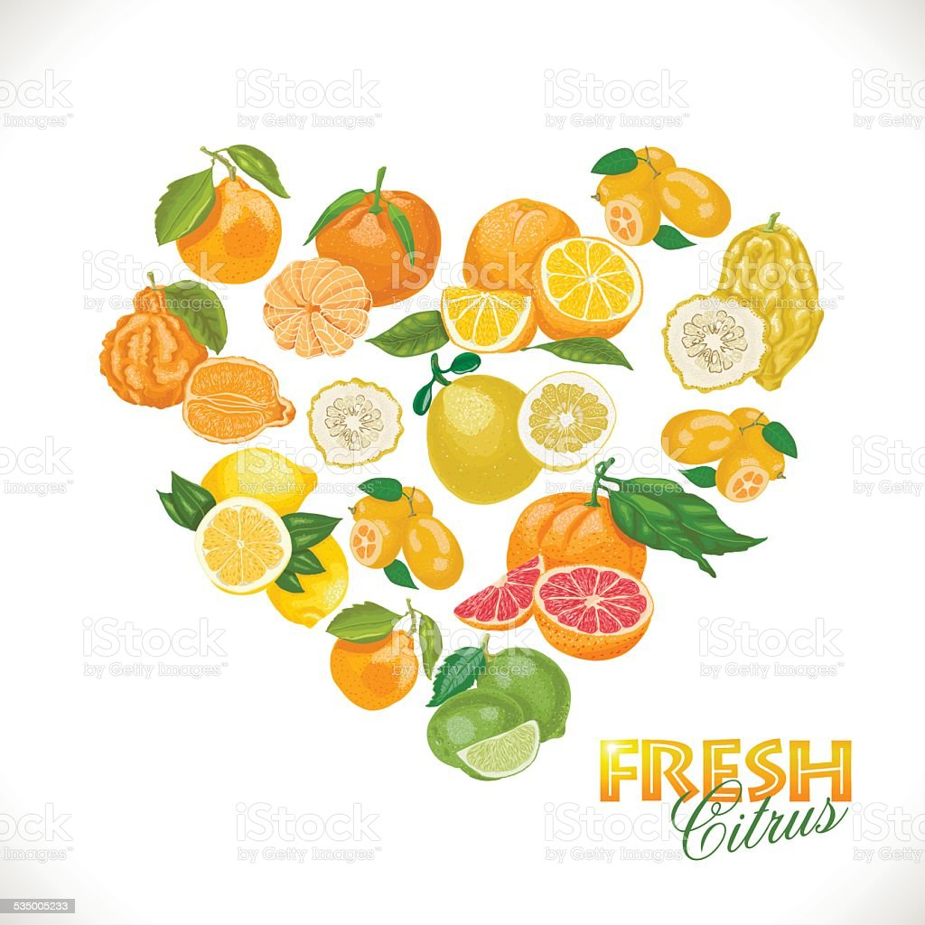 Isolated heart of citrus on a white background vector art illustration