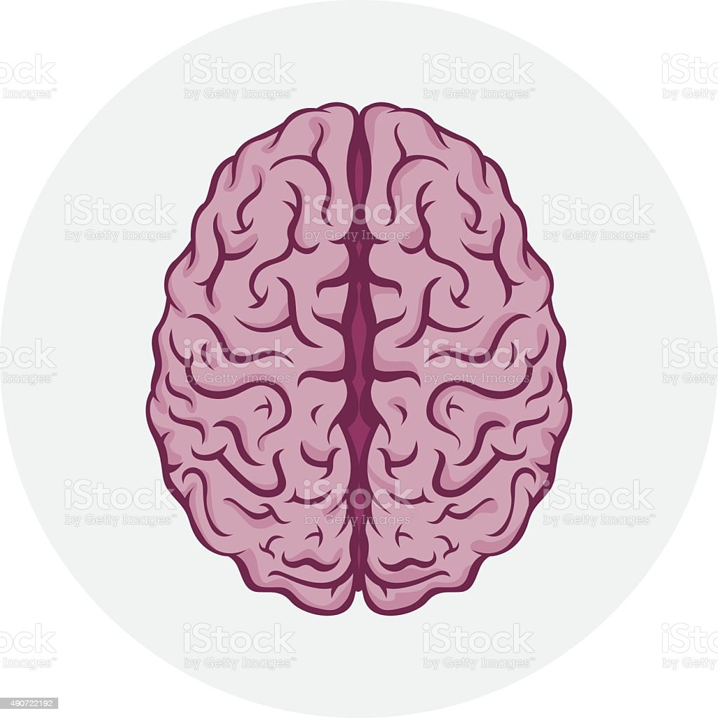 Isolated human brain vector art illustration