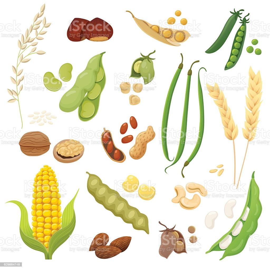 Isolated legumes, grains and nuts set vector art illustration