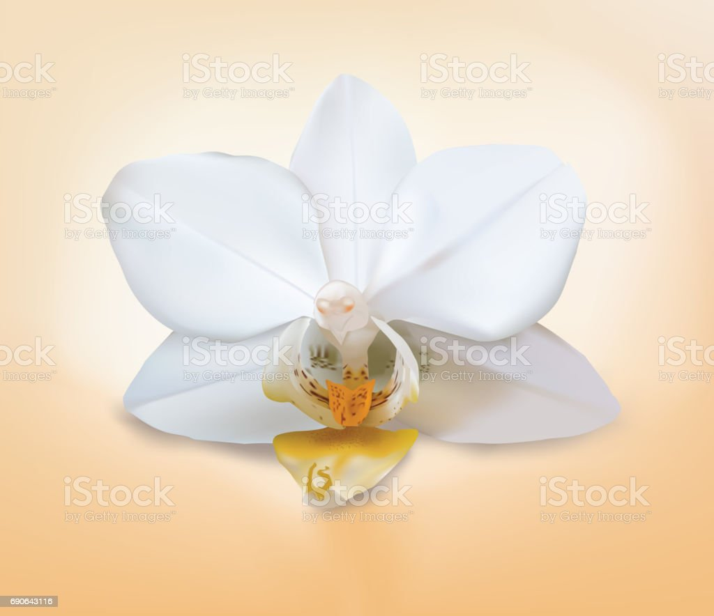 Isolated orchid flower. Rare moth mini white orchid hybrid one flower on white background with blend shadow. Vector saved in eps10. Shadow on mesh background. vector art illustration