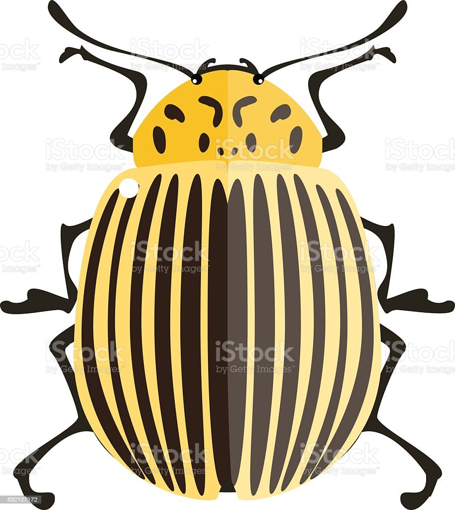 Isolated Potato bug. vector art illustration