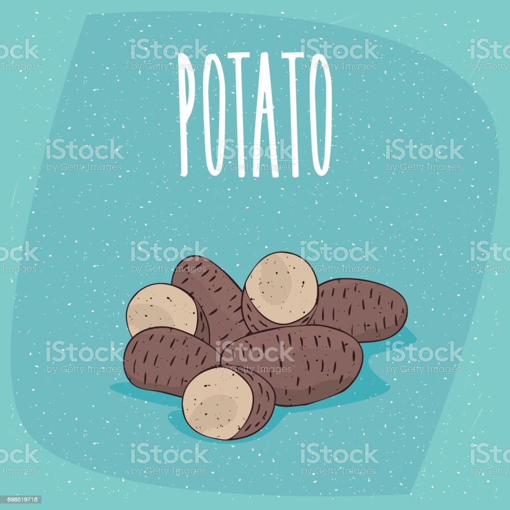 Isolated ripe russet potato tubers whole and cut vector art illustration