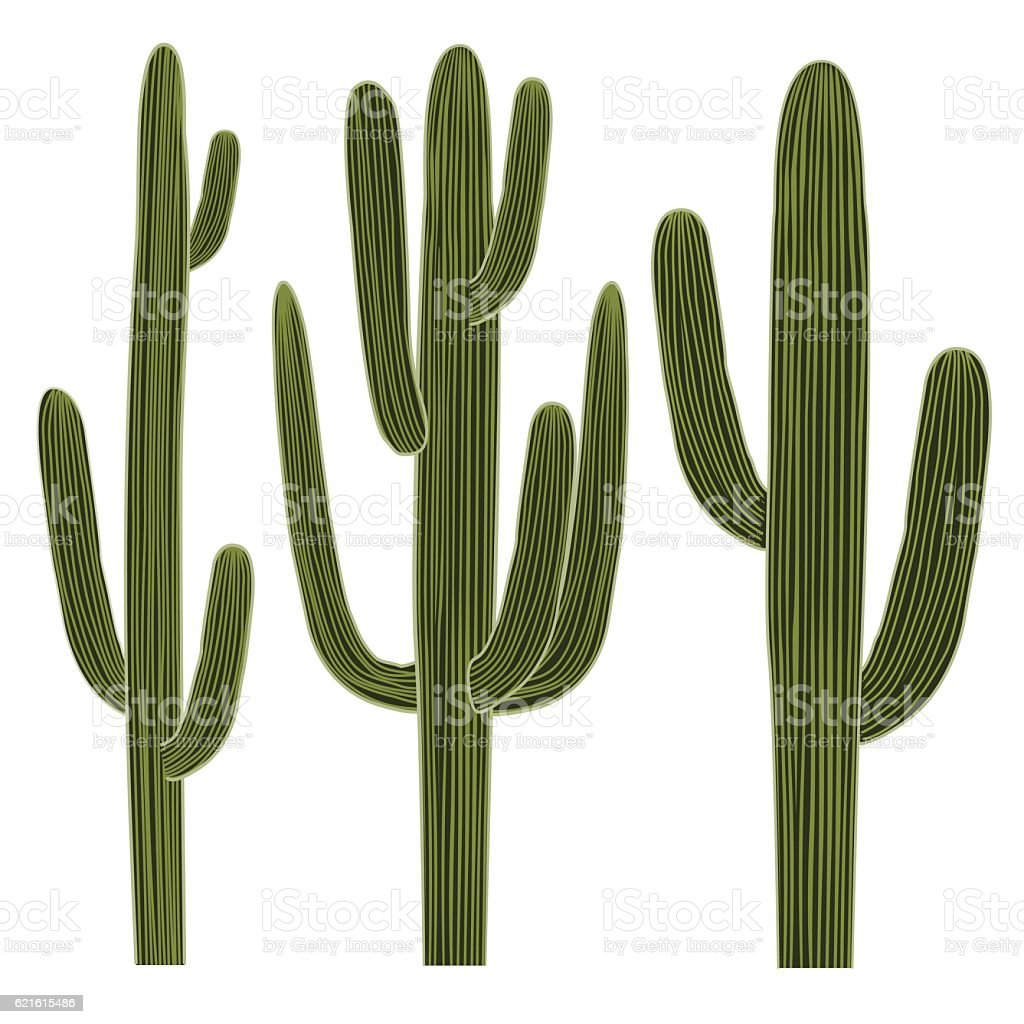 Isolated Saguaro Cactus Set vector art illustration