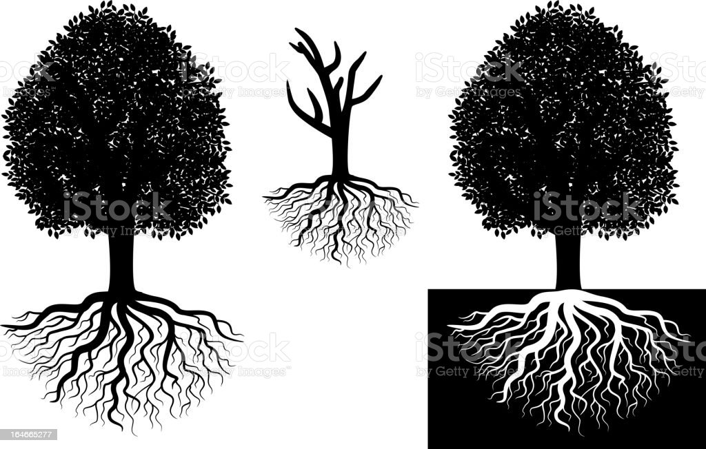 Isolated tree with roots royalty-free stock vector art