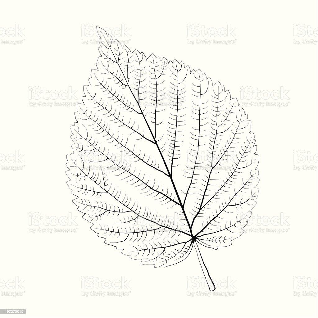Isolated vector monochrome birch leaf. vector art illustration