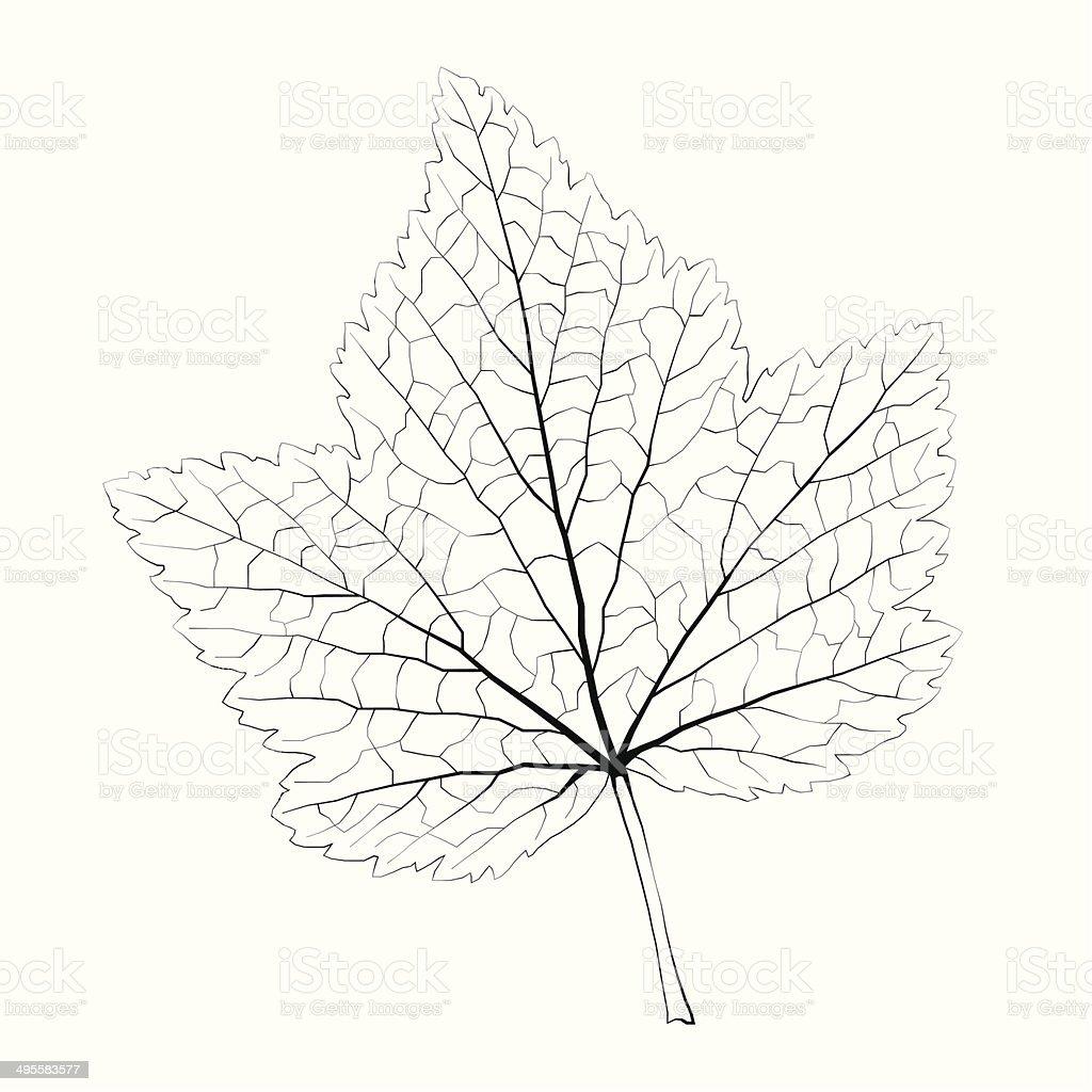 Isolated vector monochrome currant leaf. vector art illustration