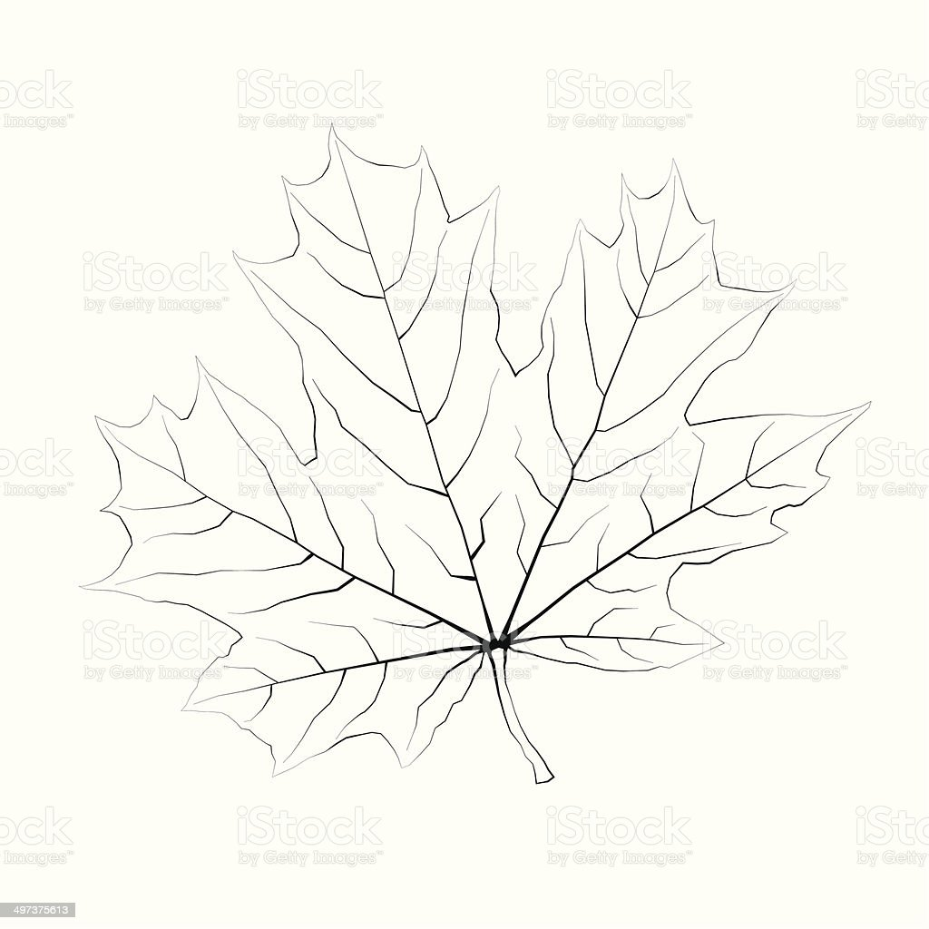 Isolated vector monochrome maple leaf. royalty-free stock vector art