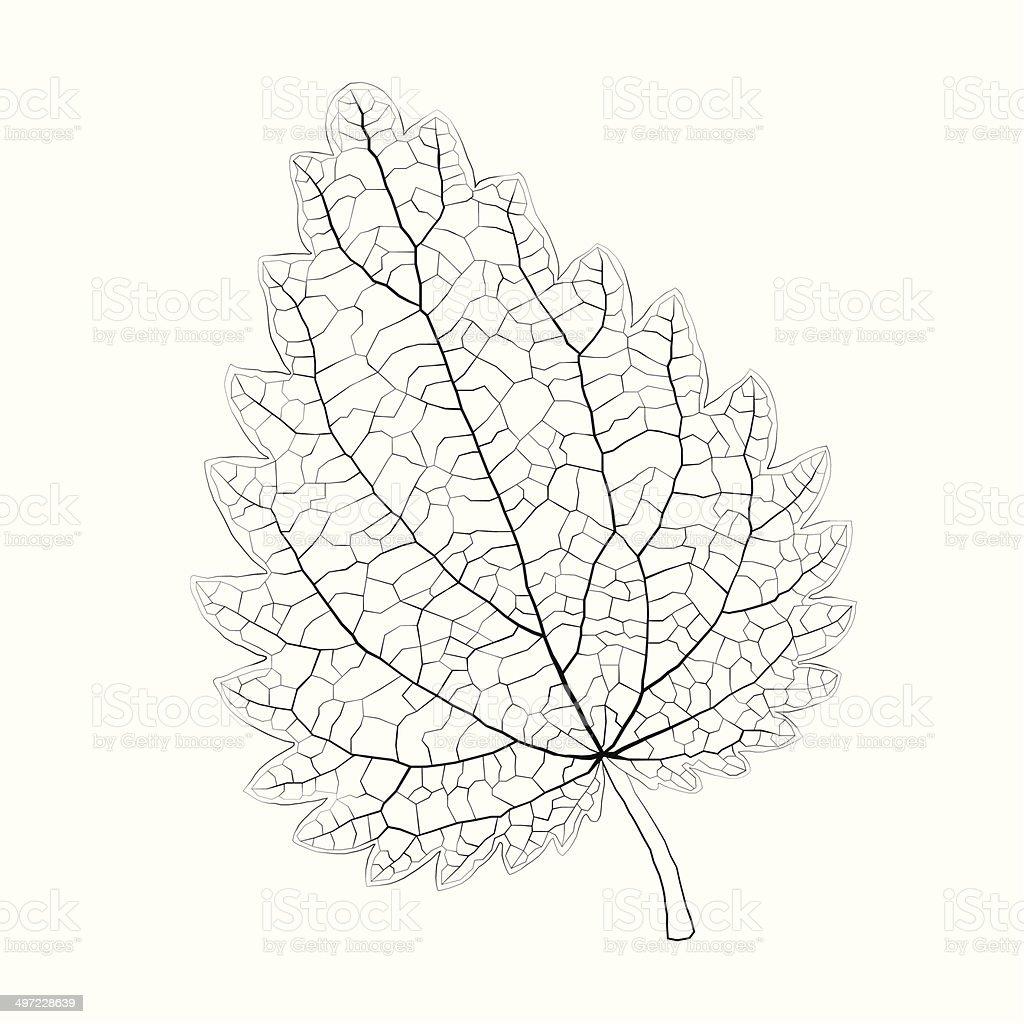 Isolated vector monochrome nettle leaf. vector art illustration