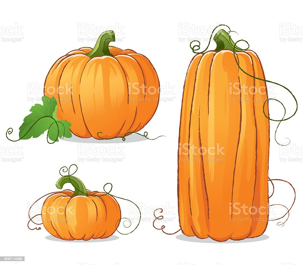 Isolated Vector Pumpkins Illustration vector art illustration
