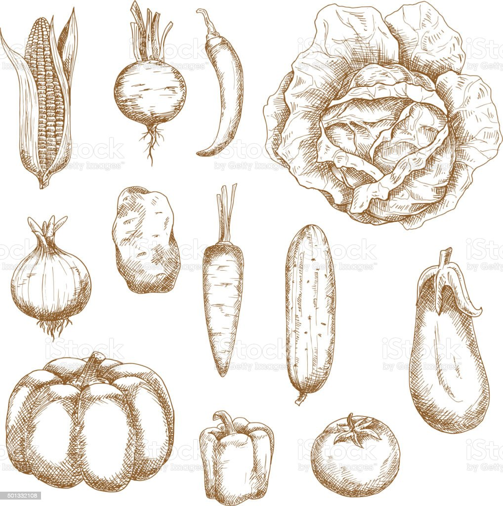 Isolated vegetables in retro sketched style vector art illustration