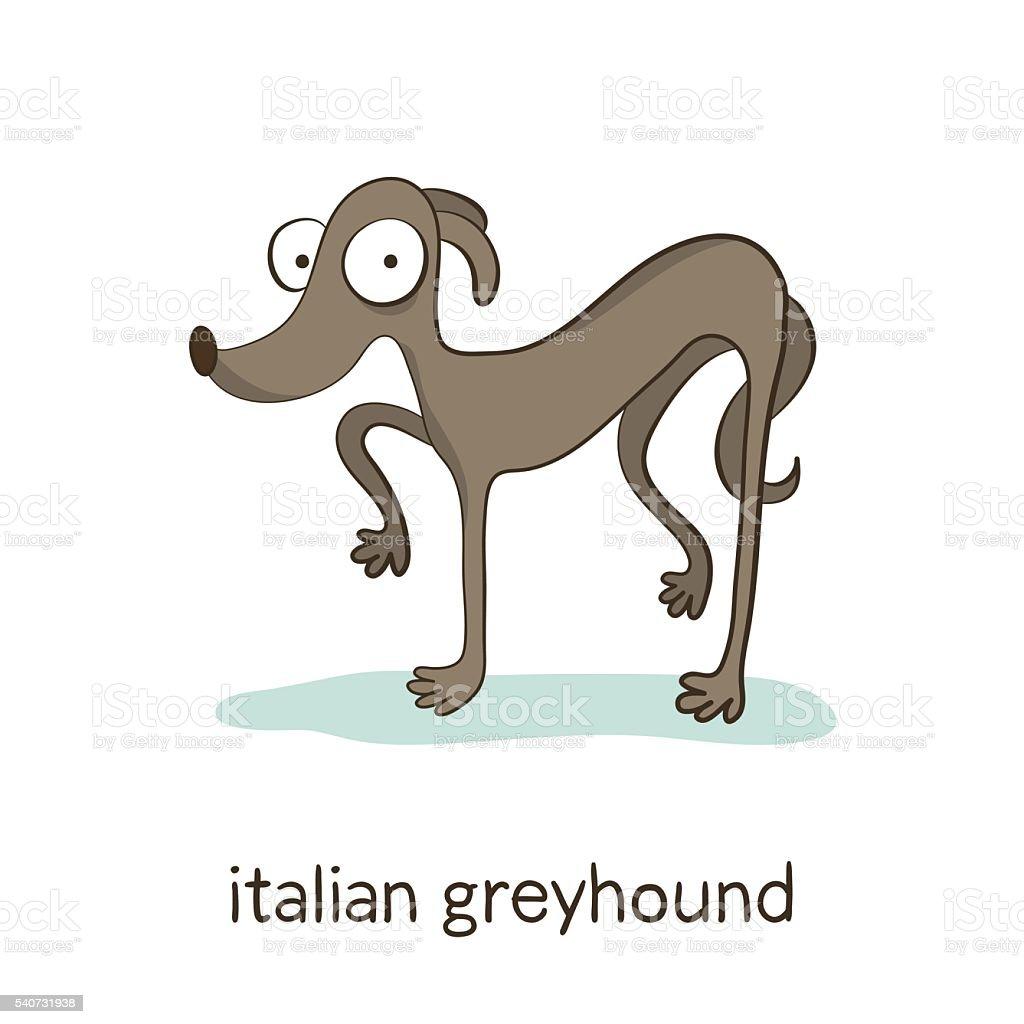 Italian greyhound. Dog character isolated on white vector art illustration