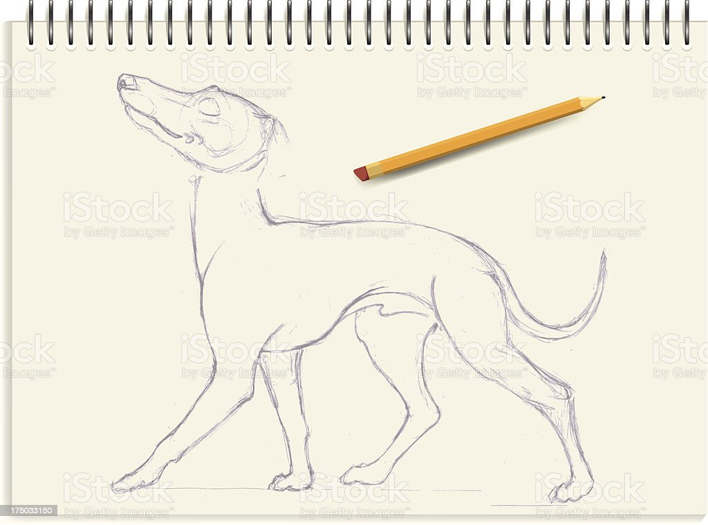Italian greyhound - sketch royalty-free stock vector art